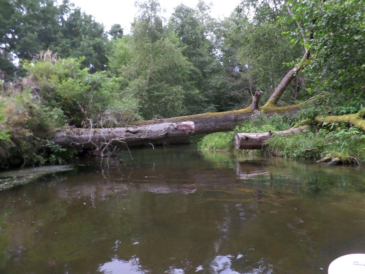 Een van de vele boomhindernissen